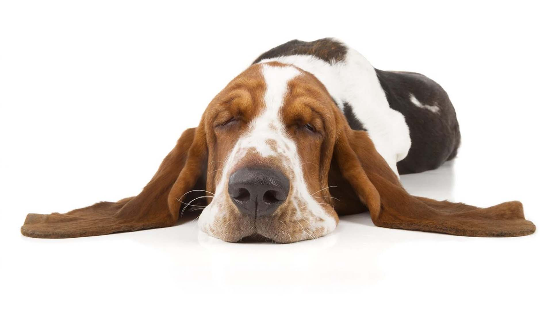 Dog friendly Rooms in Stockport Cheshire